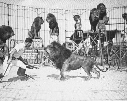 lion_gCo3M