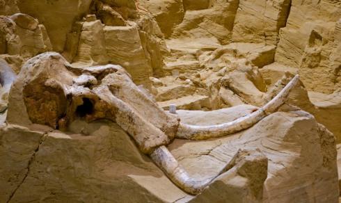 mammoth-site