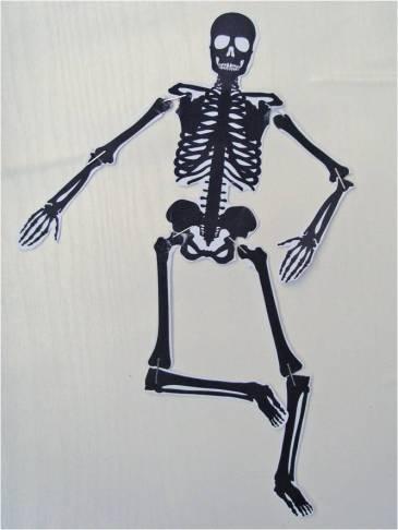 paper-skeleton